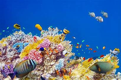 Fish Coral Underwater Reef Tropical Ocean Fishes