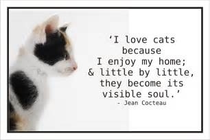 cat sayings cat lover quotes quotesgram