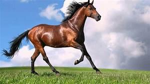 Amazing Galloping Horses 1080p HD - YouTube