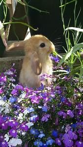 Was Sind Frühlingsblumen : die lila blumen sind symbol der weiblichkeit ~ Whattoseeinmadrid.com Haus und Dekorationen