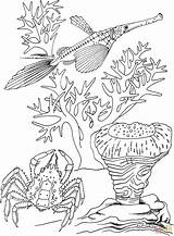 Coloring Pond Fish Drawing Crab Pages Seascape Trumpet Koi Seascapes Sea Getdrawings Drawings Print sketch template
