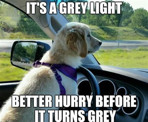 Dog In Car Meme - these 16 wholesome memes nail what it s like to drive today