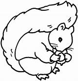 Squirrel Coloring Pages Play sketch template
