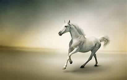 Horse Wallpapers Widescreen 2560 1600