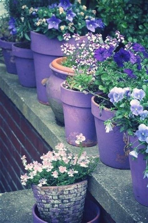 purple flowers  purple planters pictures