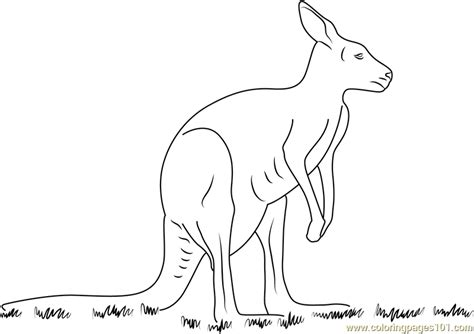 kangaroo coloring page  kangaroo coloring pages