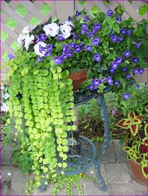 mon jardin fleuri mes pot 233 es fleuries