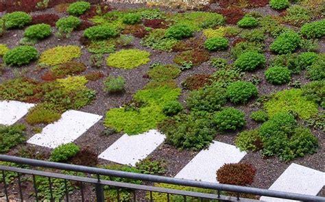 dachbegruenung pflanzen google suche dach pinterest
