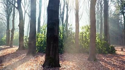 Forest Nature Living Stills Trees Cinemagraph Loop