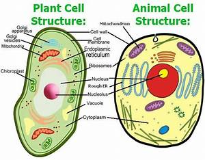 Animal Cell Model Diagram Project Parts Structure Labeled ...