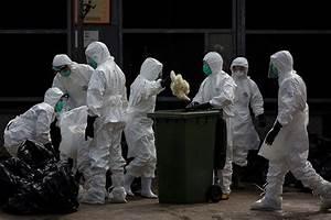 Bird Flu  Novel Antibody Offers 100  Protection Against