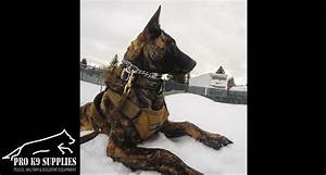 k9 supplies online working dog training equipment for With dog training accessories