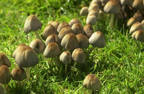 Pilz Garten Braun by Kostenlose Foto Baum Natur Wald Gras Rasen Wiese
