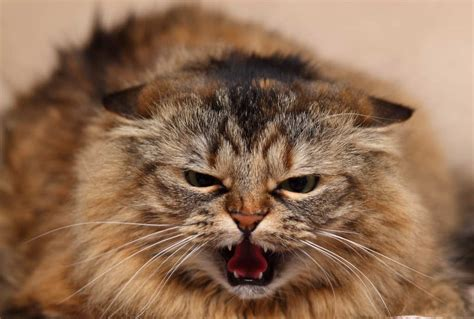 A Very Angry Cat