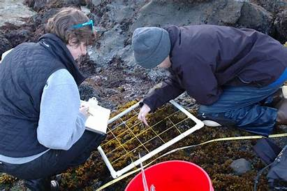 Collecting Marine Data Transect Biology Barnacles Mussels