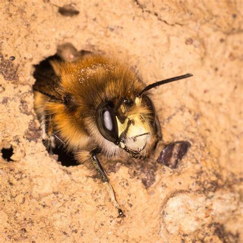 Kanādā izvieto «viesnīcas» bitēm / Raksts