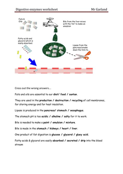 enzymes digestion by dave gar uk teaching resources tes