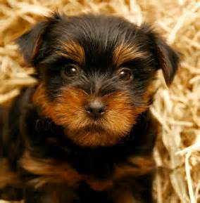 hypoallergenic dog breeds quotes