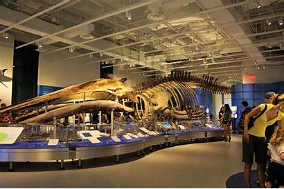Museum Nature Canadian Ottawa Attractions Tourism Whale