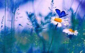 Spring Butterfly HD Desktop Background Wallpapers ...