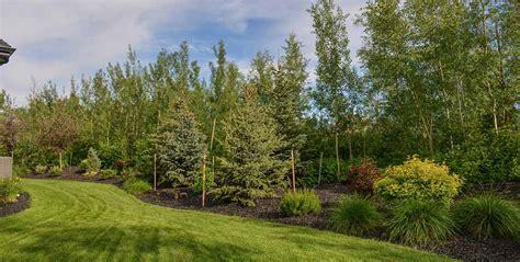 sound barrier shrubs backyard landscaping and design salisbury landscaping