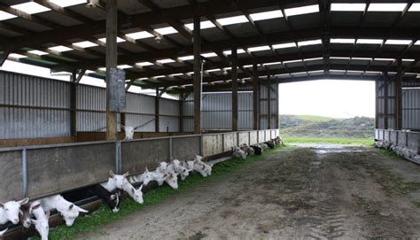 goat shed design goat shelter plans what must you look out for when