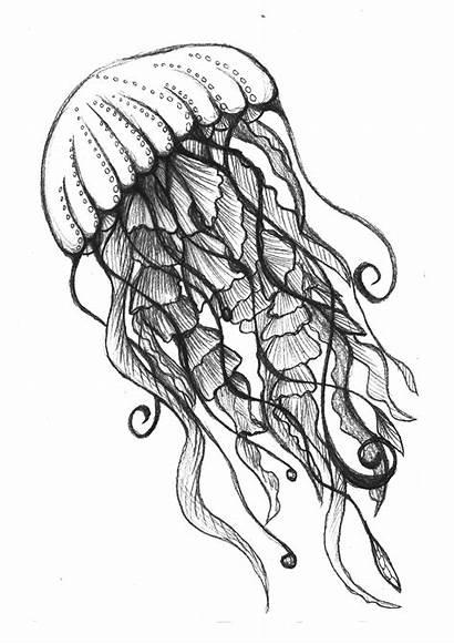 Jellyfish Drawing Sketch Ocean Pencil Drawings Underwater