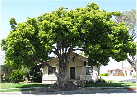 UFEI - SelecTree: A Tree Selection Guide