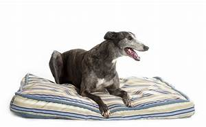 Whats the best indestructible dog bed for Best durable dog bed