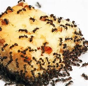 Was kann man gegen ameisen im rasen tun ameisen im rasen for Französischer balkon mit was kann ich gegen maulwurf im garten tun