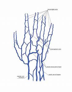 Venous System Of The Hand Photograph By Asklepios Medical