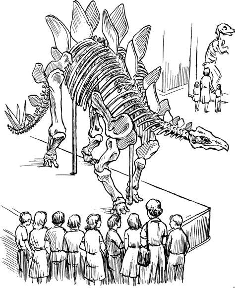 dinosaurierskelett ausmalbild malvorlage dinosaurier