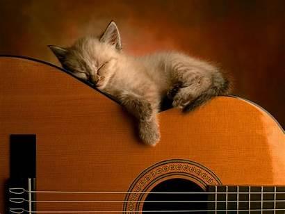 Guitar Sleeping Change Background Cat Kitten Sound