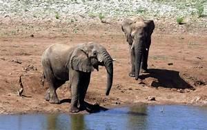 Elefanten Fotos