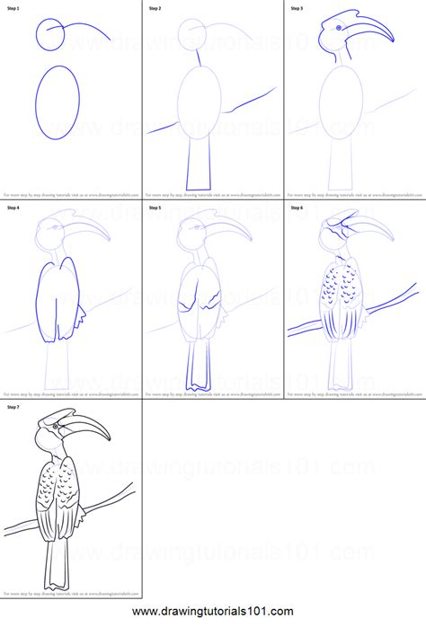 draw  great hornbill printable step  step