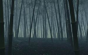 Dark Forest Wallpaper - WallpaperSafari