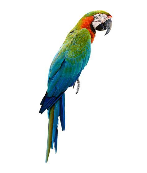 wallmania muursticker papegaai
