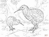 Kiwi Coloring Pages Spotted Drawing Bird Printable Supercoloring Ausmalbilder Zealand Animals Vogel Zum Ausmalen sketch template