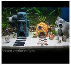 1000 images about fish an aquriums on pinterest salt