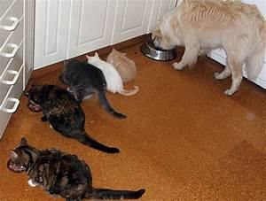 snowy39s cats kittens and other animals thread With dog doors that keep other animals out