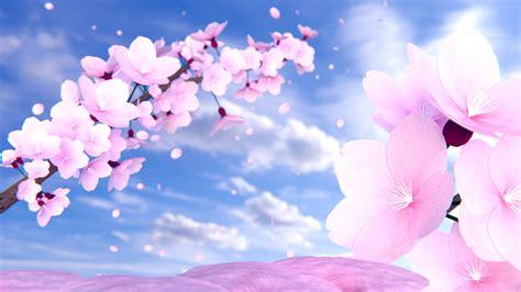 Cherry Blossom Animated Wallpaper - cherry desktop wallpaper wallpapersafari