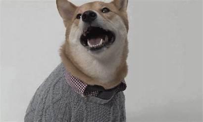 Dog Giphy Menswear Shiba Dogs Inu Gifs