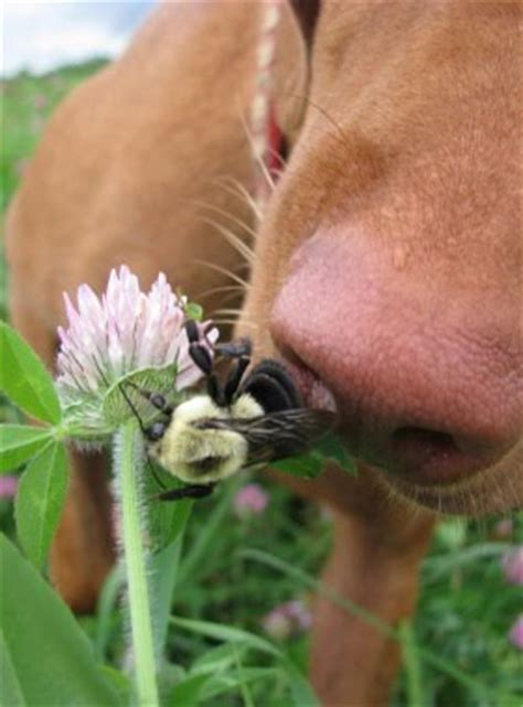 dangerous bugs dogslife dog breeds magazine