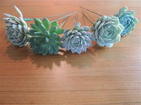 wired succulents for diy succulent bouquet