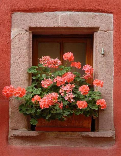 Fioriere Per Davanzale Finestra Pin Di Lionetti Su Scalinate Flores En Las Ventanas