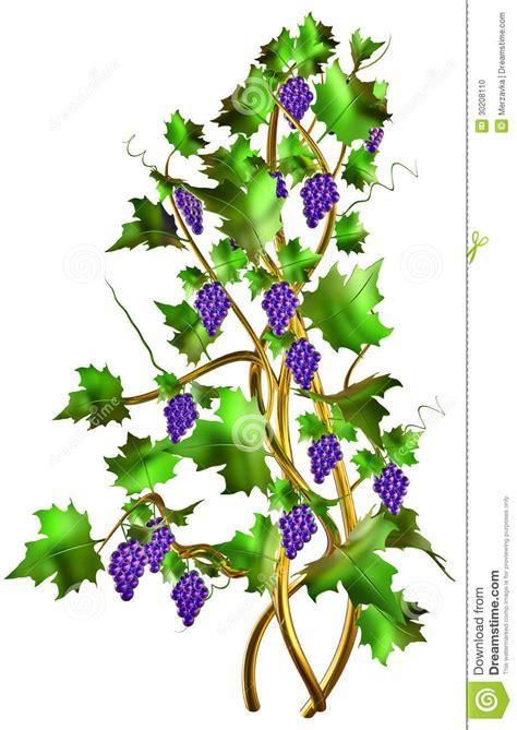 grape branch clipart   cliparts  images