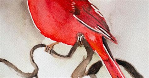 watercolor painting  cardinal red bird  bible verse