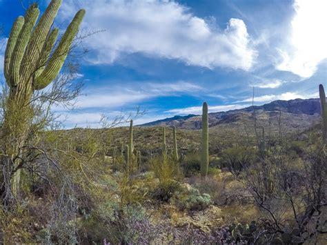 Mountain Biking The Saguaro National Park East Loop