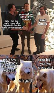these white wolves laughing memes are taking 20 pics