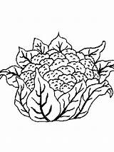 Cauliflower Coloring Pages Vegetables Printable Recommended Colors Mycoloring sketch template